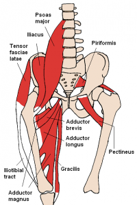 cross back chair anterior hip muscles