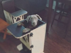 dog high chair dog high chair ht ml x