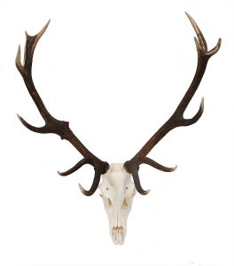 hanging rope chair original red deer antler on skull